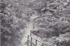 Kiltrochan Wood