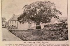 Clachan oak tree
